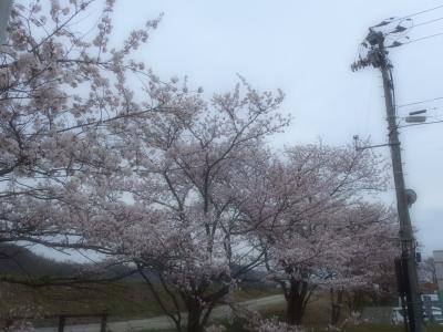 yamagata20140421 (1)