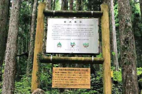 21世紀の森公園 巨大杉案内板