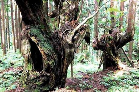 21世紀の森公園 (6)