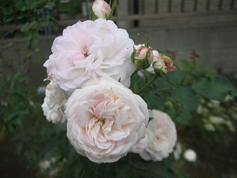 シンデレラ (2)