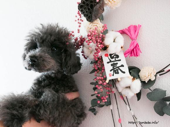 犬 お正月
