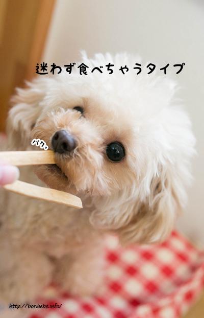 食べる 犬