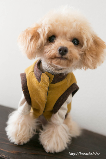 犬服 ハンドメイド