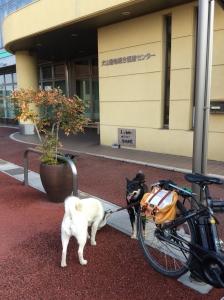 犬山動物病院前20150120