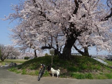 DSC01422桜塚古墳