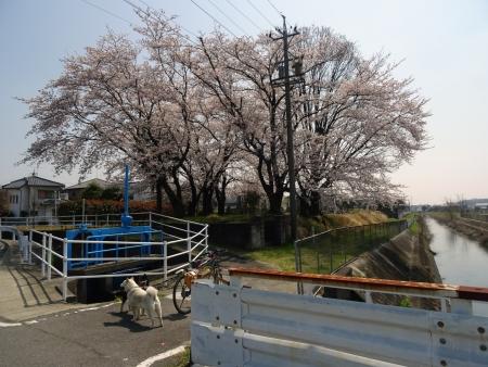 DSC01436s茶臼橋