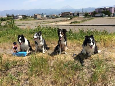 富士山をバックに4匹で