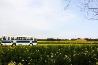 古墳と菜の花と路線バス^^