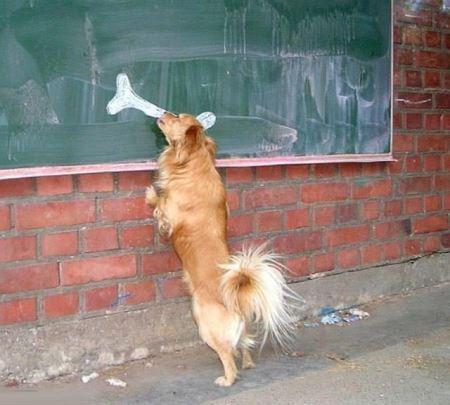 黒板に書かれた骨を食べようとする犬