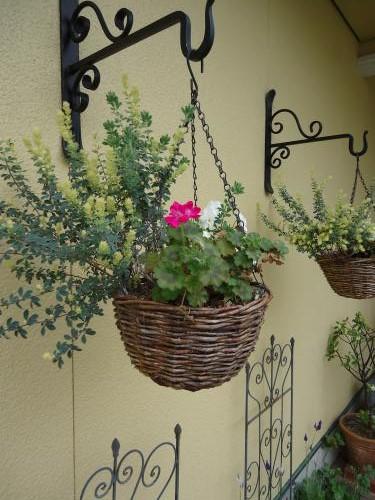 hanging-basket-harugakita.jpg
