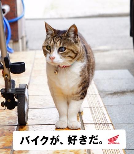 baikusuki2.jpg