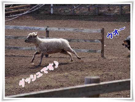 ⑦0321(土)P3220070