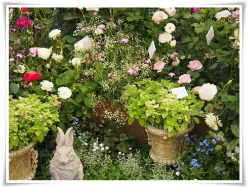 ⑤国際薔薇ガーデンニグショーP5161294