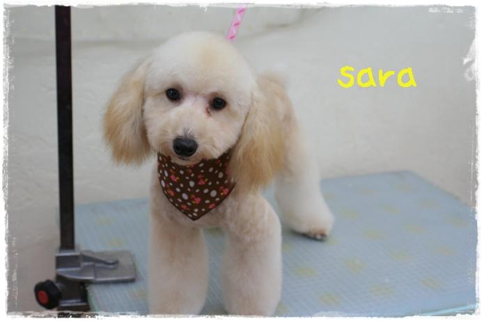 sara赤澤