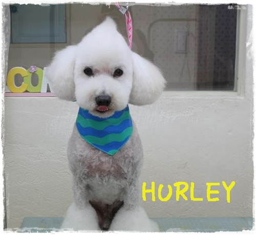 hurley伊藤