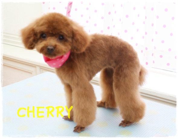 cherry矢吹