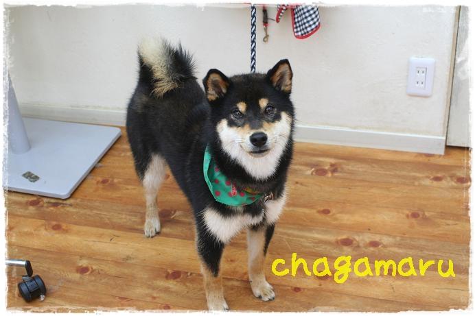 chagamaru