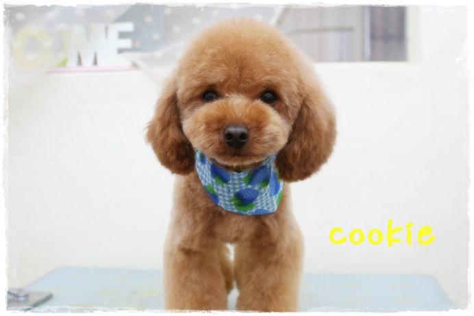 cookie江藤