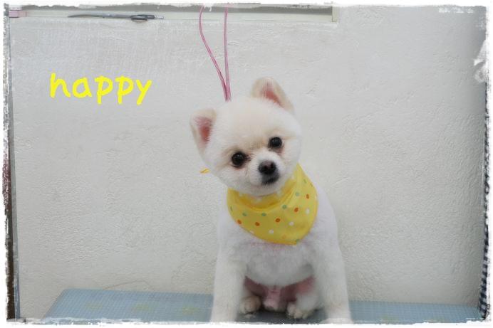 happy小玉