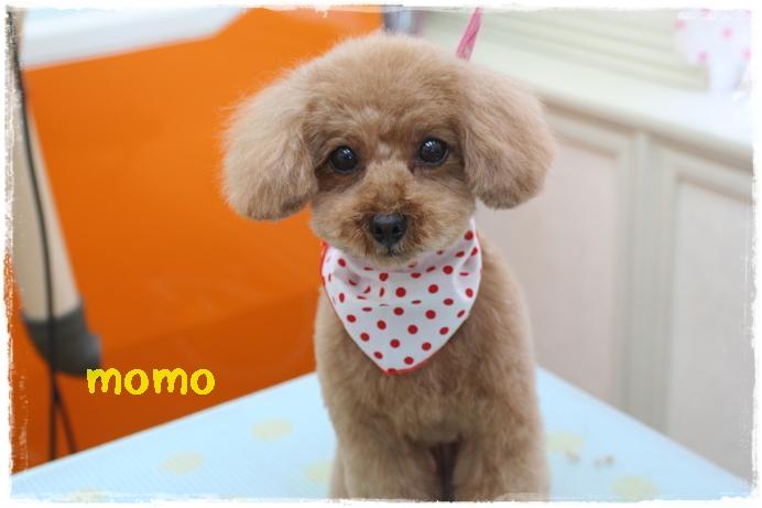 momo岡