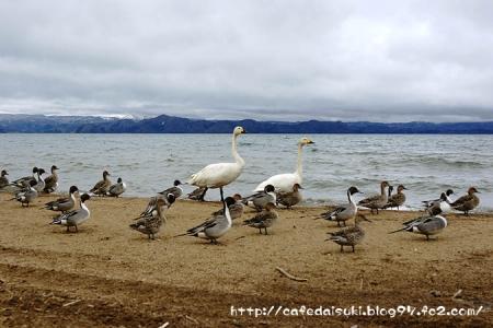 猪苗代湖2015spring