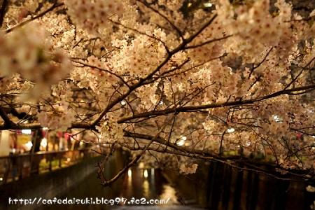 中目黒の夜桜2015