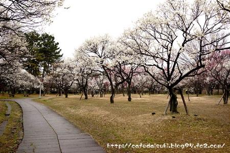 大宮第二公園@埼玉県さいたま市大宮区