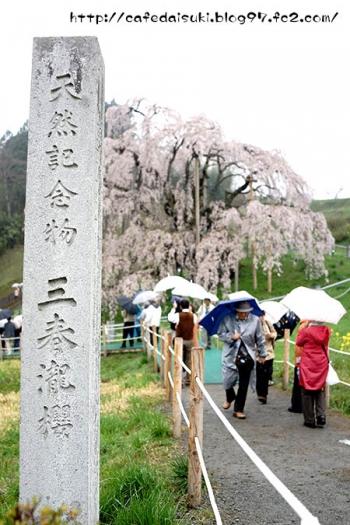三春滝桜@福島県三春町