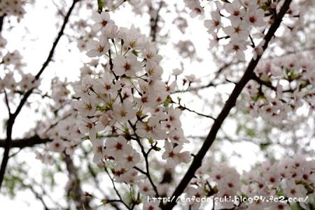 鶴岡八幡宮2015spring