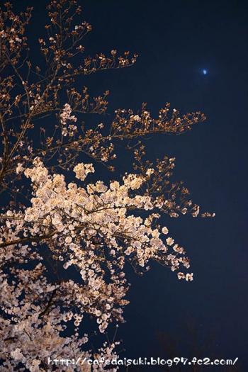 上野公園の夜桜2015