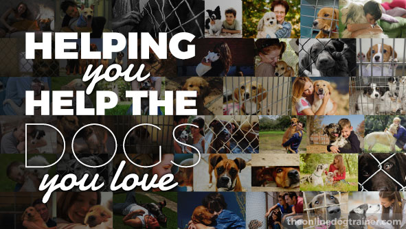 Helping-you-help-the-dogs-you-love.jpg
