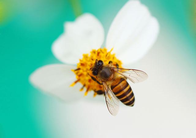 20150301bee_pollen-thumb-640x449-84773.jpg