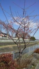 0312_06sakura.jpg