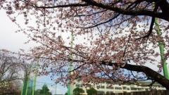 0324_06sakura_b.jpg