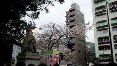 0329sakura01.jpg