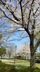 0402_04sakura.jpg