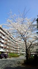 0402_09sakura.jpg