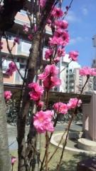 0402_10hanamomo.jpg