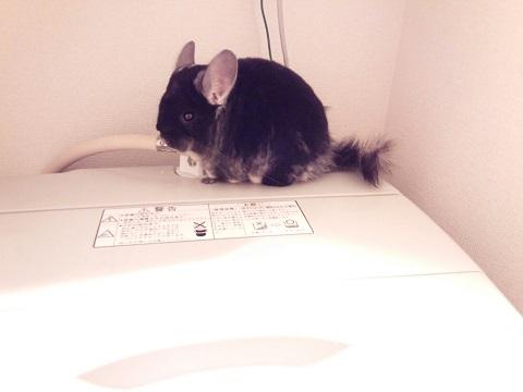 加奈ちゃん、洗濯機置き場で
