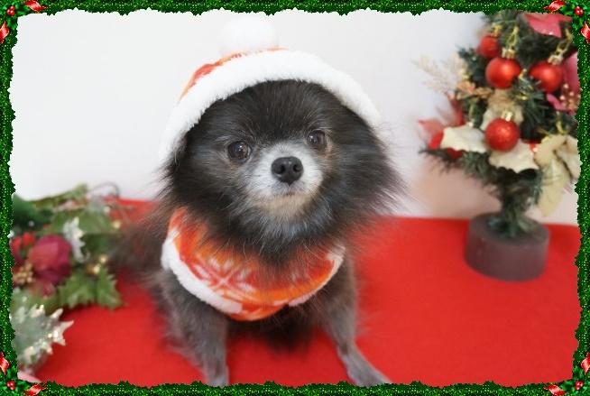 クリスマス4 14-12
