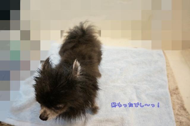 14年12月のしゃんぷー・ちろる4 15-01