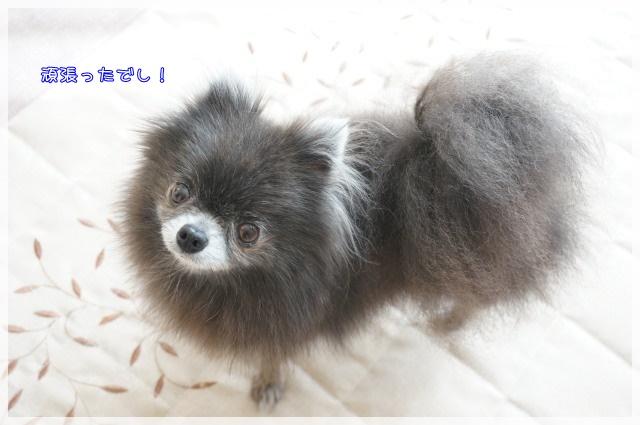 14年12月のしゃんぷー・ちろる5 15-01
