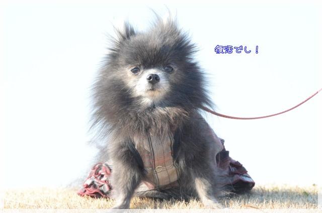 くしくし4 15-02