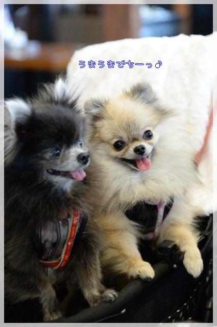 星乃珈琲9 15-03