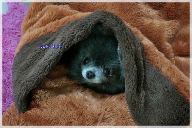 寒い日は・・・5 15-04