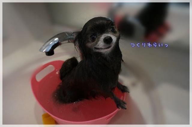 3月のしゃんぷー・ちろる4 15-04