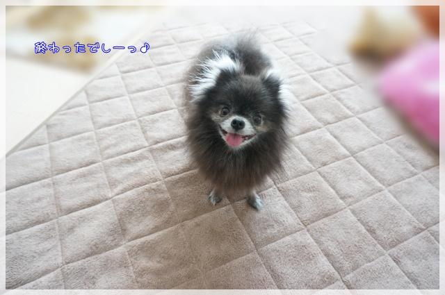 3月のしゃんぷー・ちろる7 15-04