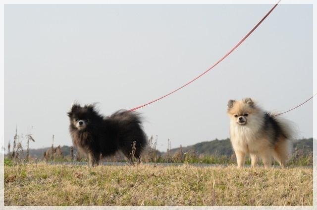 ろんぐお散歩5 15-04