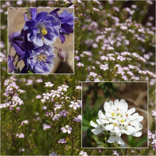 お花1 15-04
