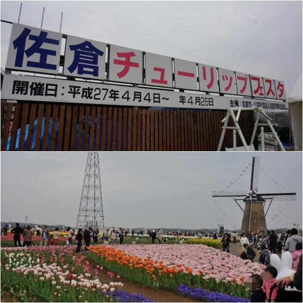佐倉チューリップフェスタ2 15-05